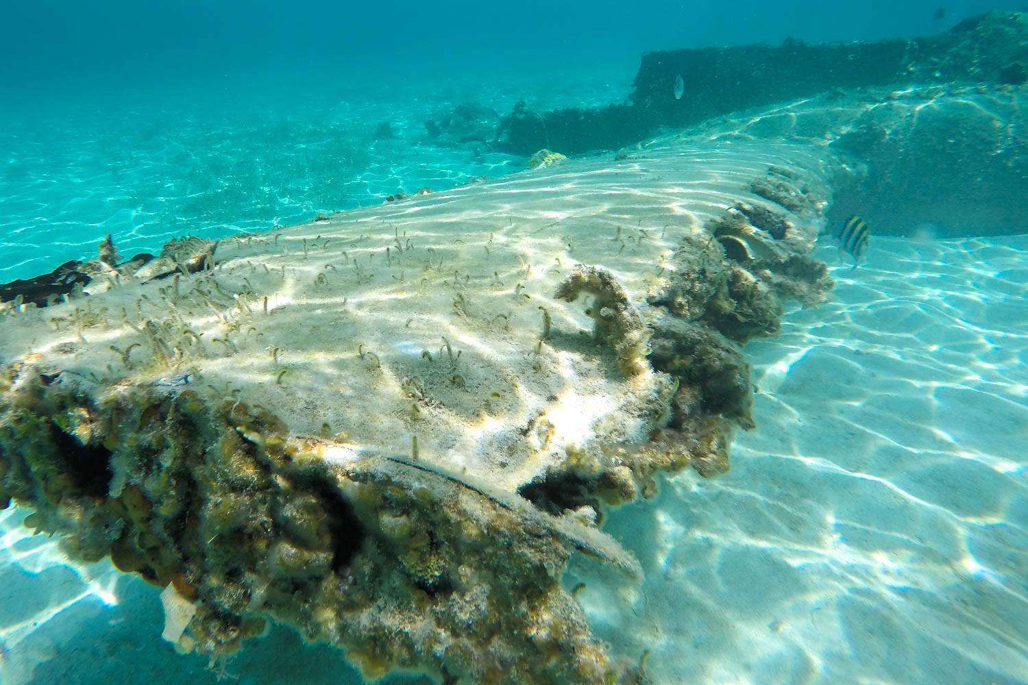 Bahamas underwater plane wreck at Staniel Cay Exuma. This intriguing Bahamas Plane Wreck is a twin engined beechcraft plane that crashed in the 1970 drug running at night.