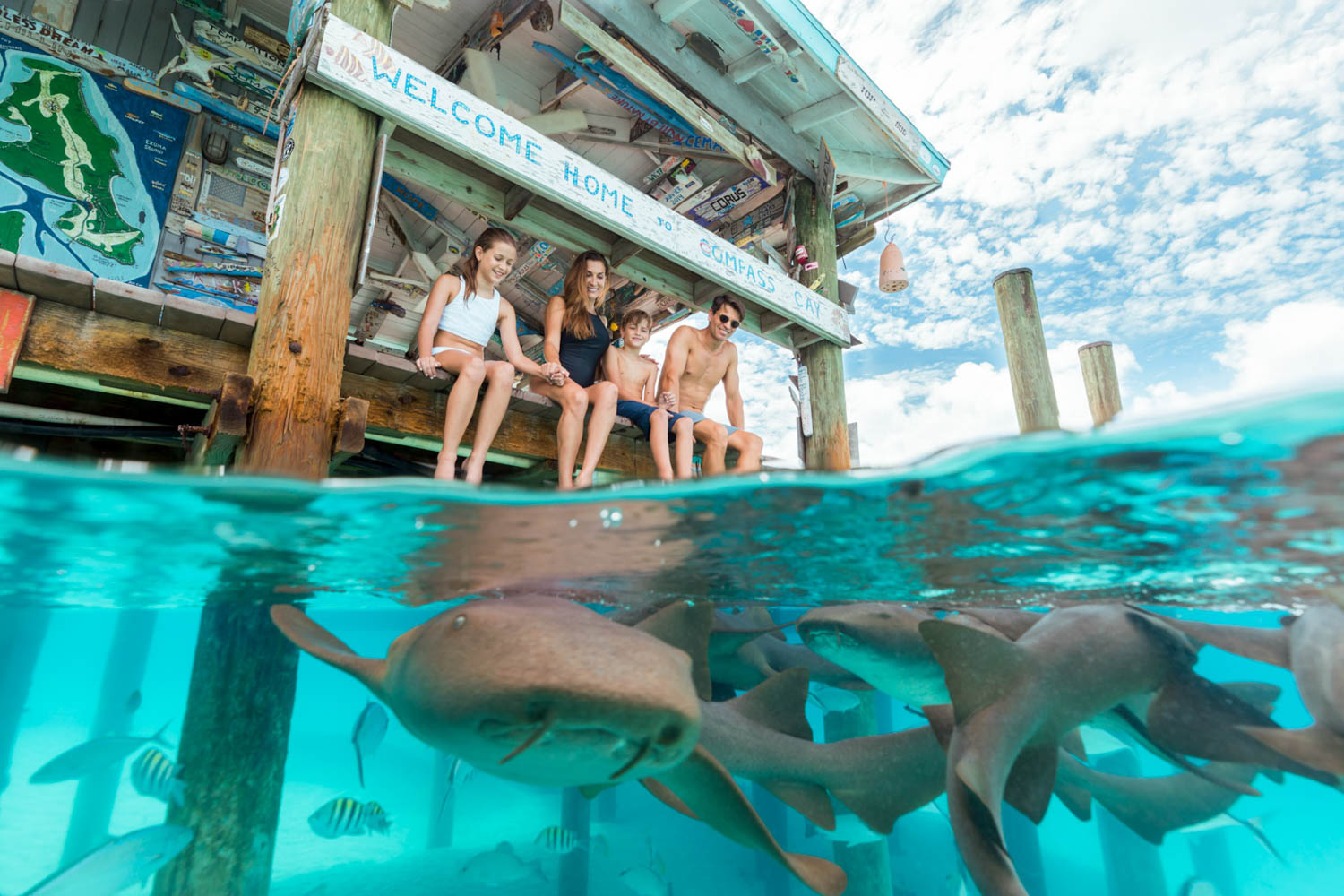 Compass Cay Sharks are at the Compass Cay Marina in Exuma Bahamas. This is where you can go swimming with nurse sharks.