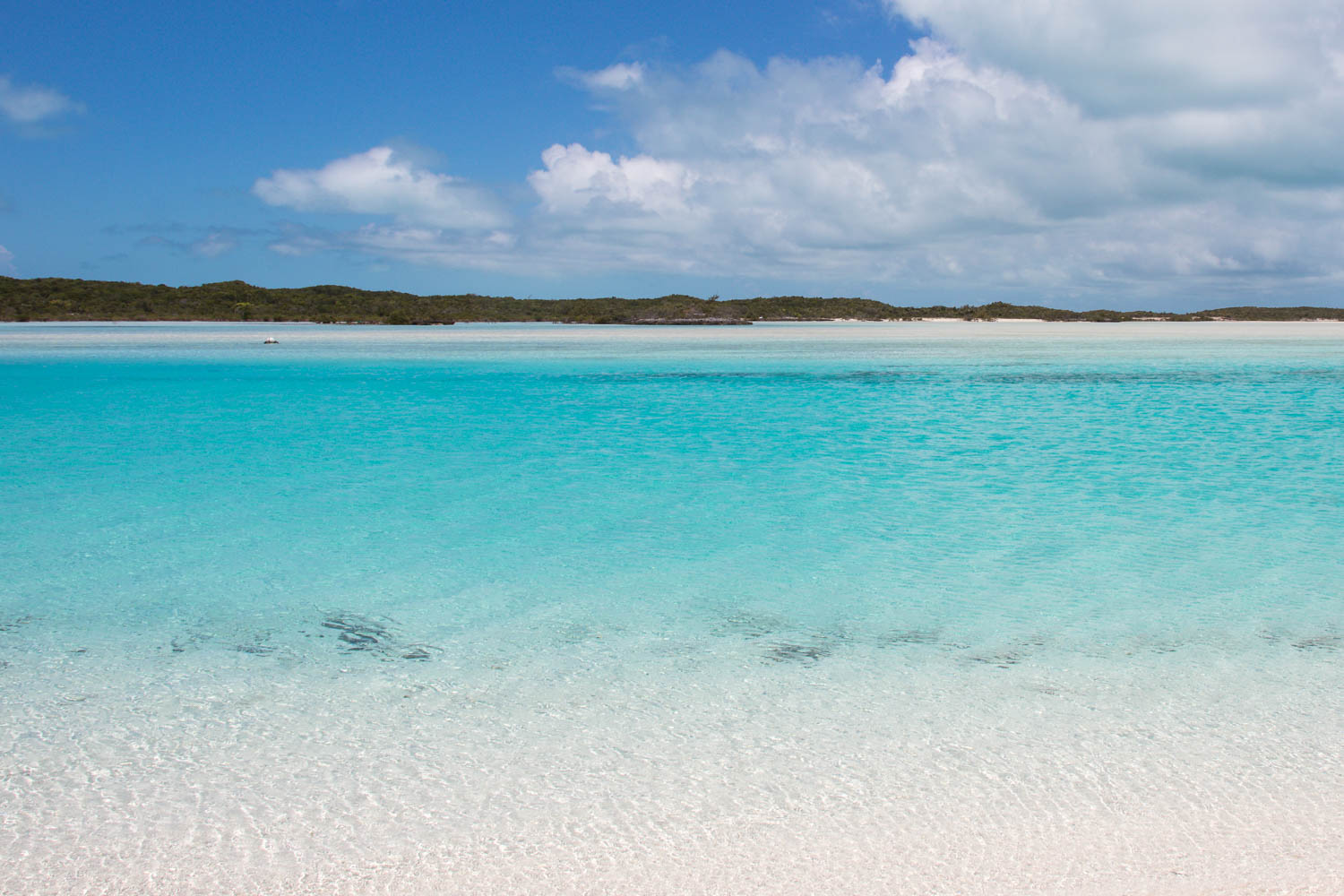 Exuma Cays Sand Bar at Pipe Creek is a short boat ride from Compass Cay. Visit the best Bahamas Sand Bar on a Bahamas Day Trip from Nassau or Florida.