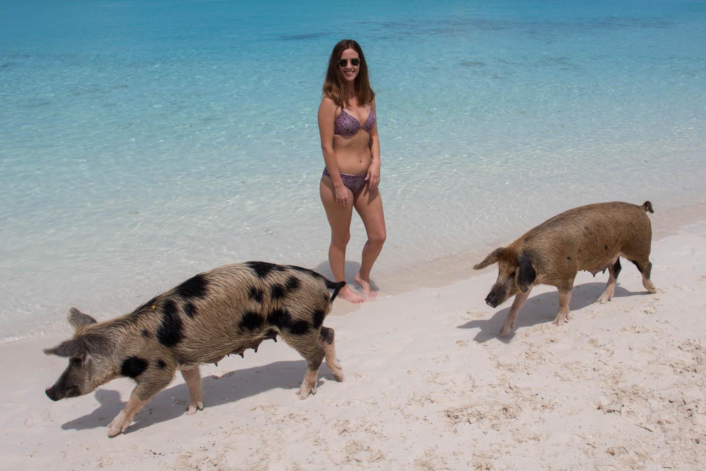 Visiting the famous Bahamas Swimming Pigs at Pig Island Bahamas, on Big Major Cay in the Exuma Islands.