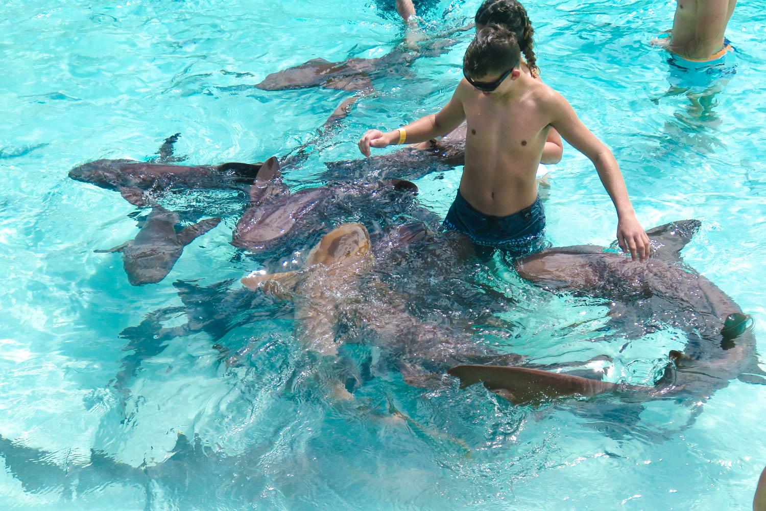 Swimming with Nurse Sharks Bahamas at Compass Cay Marina. These Nurse Sharks are mostly harmless to humans. Compass Cay Bahamas is located in the Exumas.