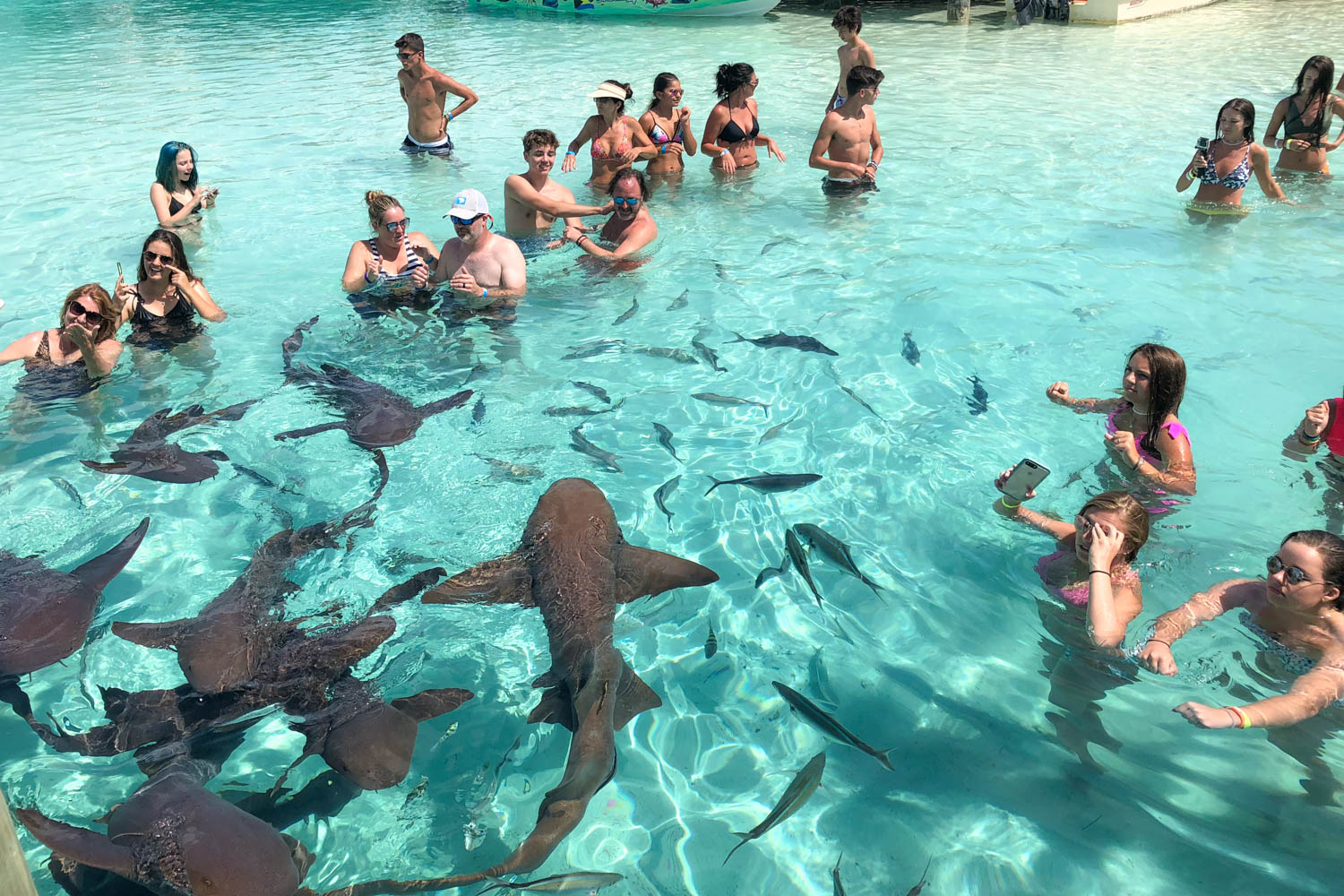 Day trips to Bahamas often include a visit to Compass Cay to swim with sharks. A boat from Fort Lauderdale to Bahamas leaves every day in the morning. Captured on a day trip to Bahamas from Fort Lauderdale.