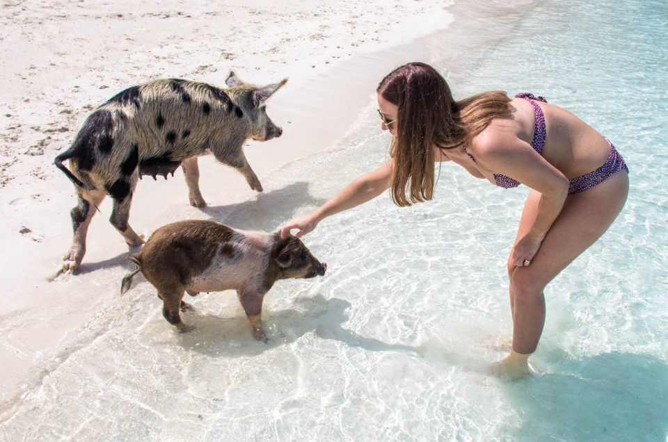 What Will You Get Out of Your Pig Beach Bahamas Tour