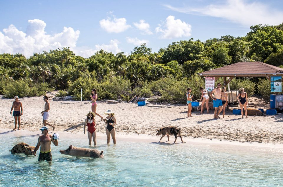 How to Interact with the pigs on your Pig Beach Exuma Tour