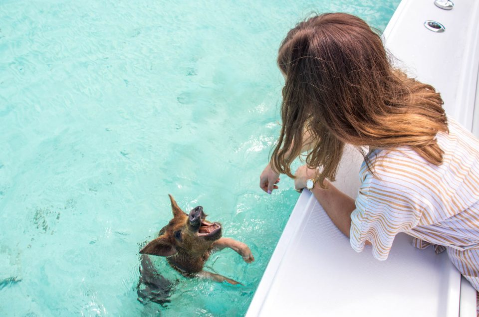 Where Can You Swim with Pigs in the Bahamas?