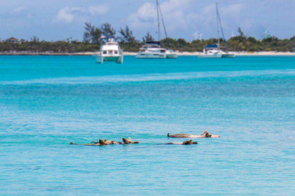 Where is Pig Island Bahamas?