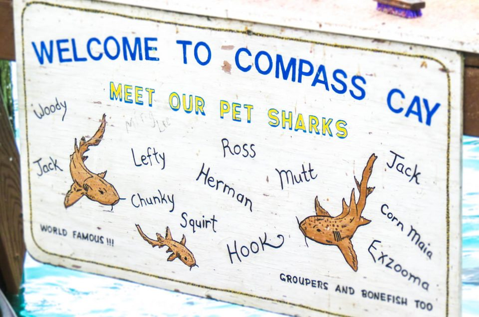 How to visit the Compass Cay Sharks in the Bahamas